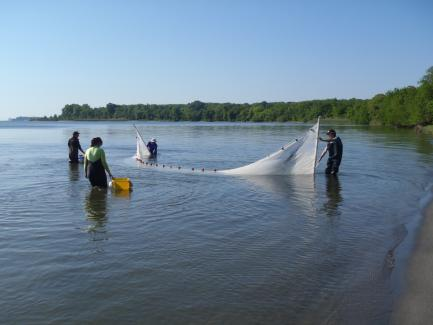 Researchers using net in the Rhode River