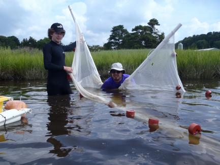Biologists using net to capture fish samples