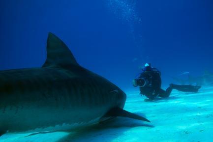 """Still from """"Shark Girl"""""""