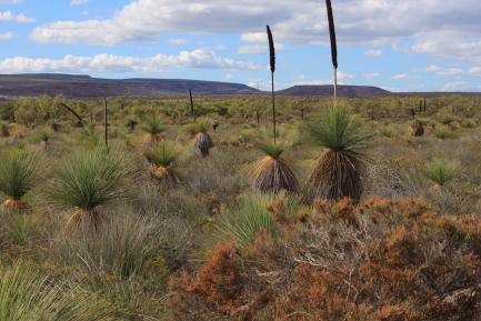 desert landscape with small shrubs