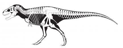 T. rex skelton