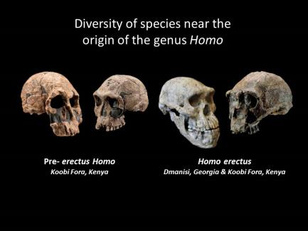Diversity of species