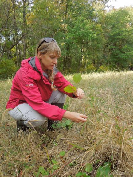 Susan Cook-Patton examines a sycamore