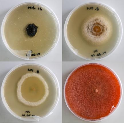 Four Petri dishes