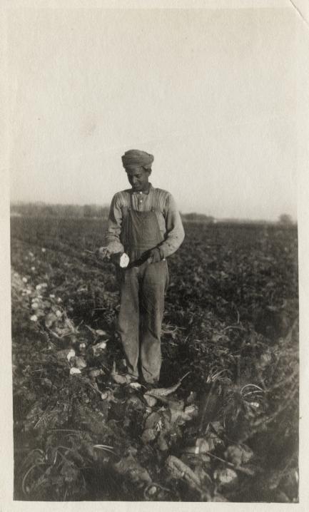 Beyond Bollywood - Worker Harvesting Beets