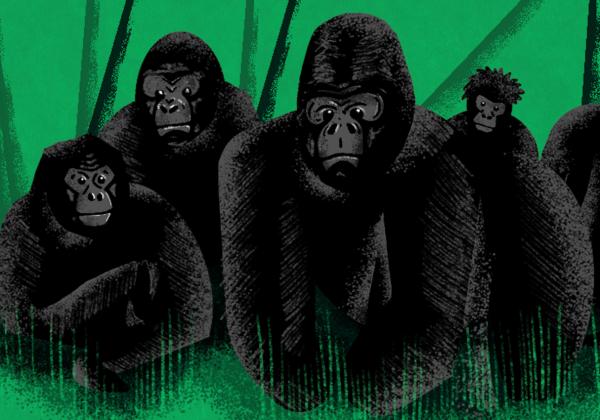 Illustration of gorillas