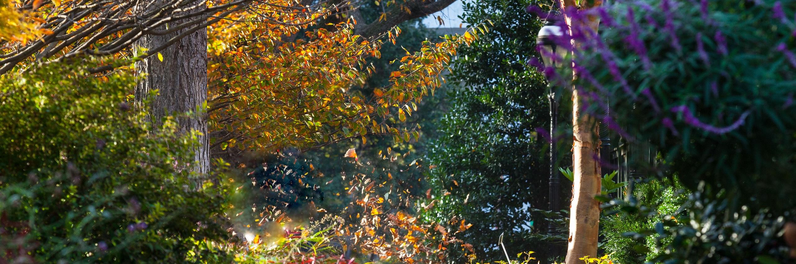 view of fall garden