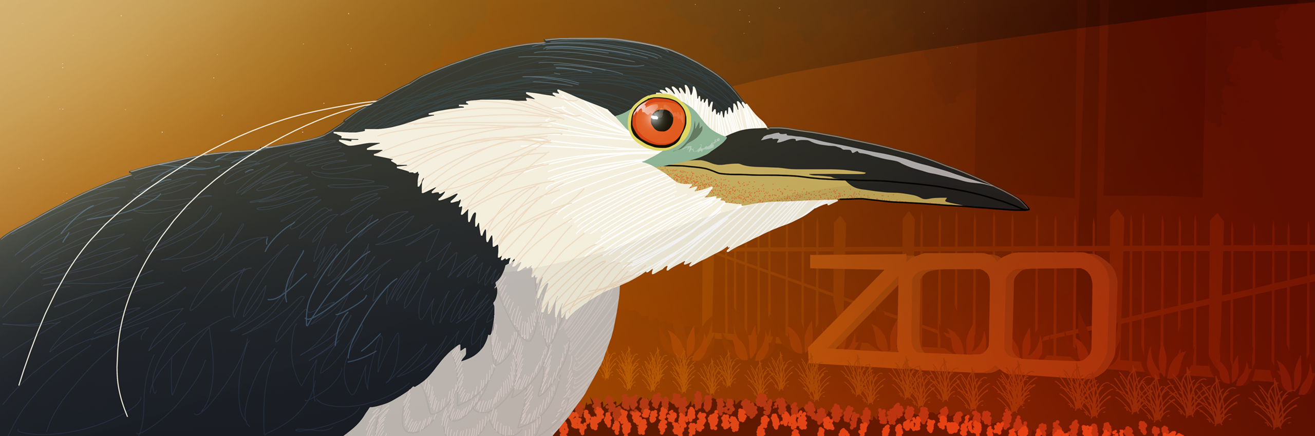 illustration of a black-crowned heron