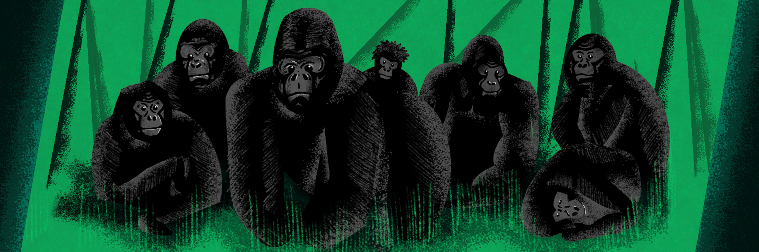 Illustration of gorillas