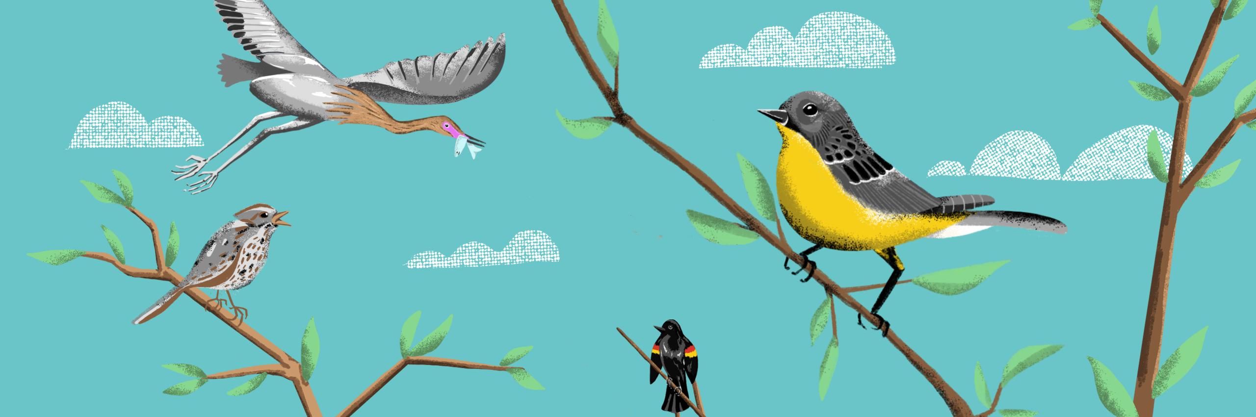 illustrated birds.