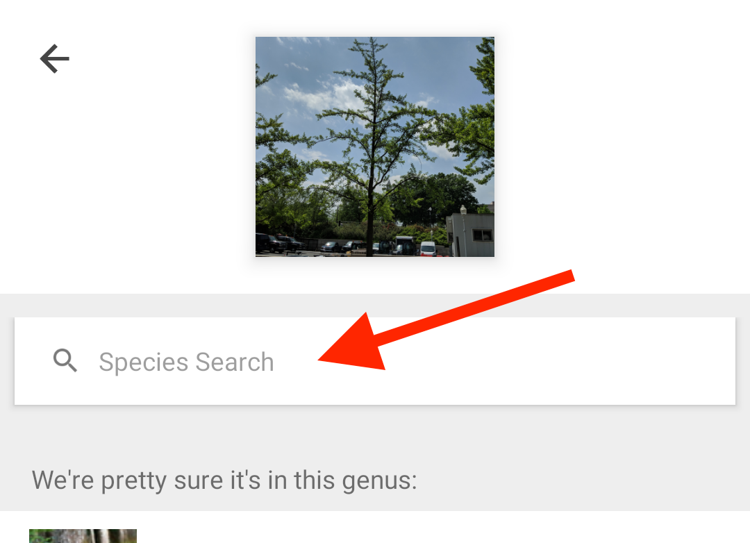 "Type ""ginkgo biloba"" in the ""Species Search"" box."