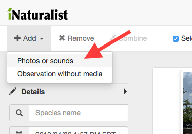 "You can add additional photos on the next page by clicking ""Add"" > ""Photos or sounds"" in the top menu or by dragging files into the browser window."